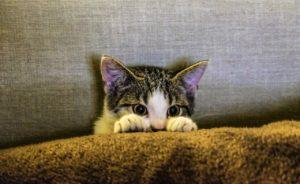 katzenhaare entfernen sofa